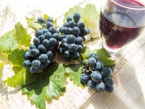 One of the resveratrol benefits is the anti-inflammatory perks