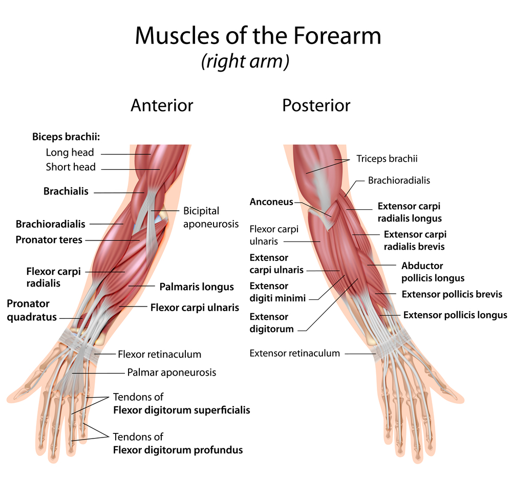 forearm pain